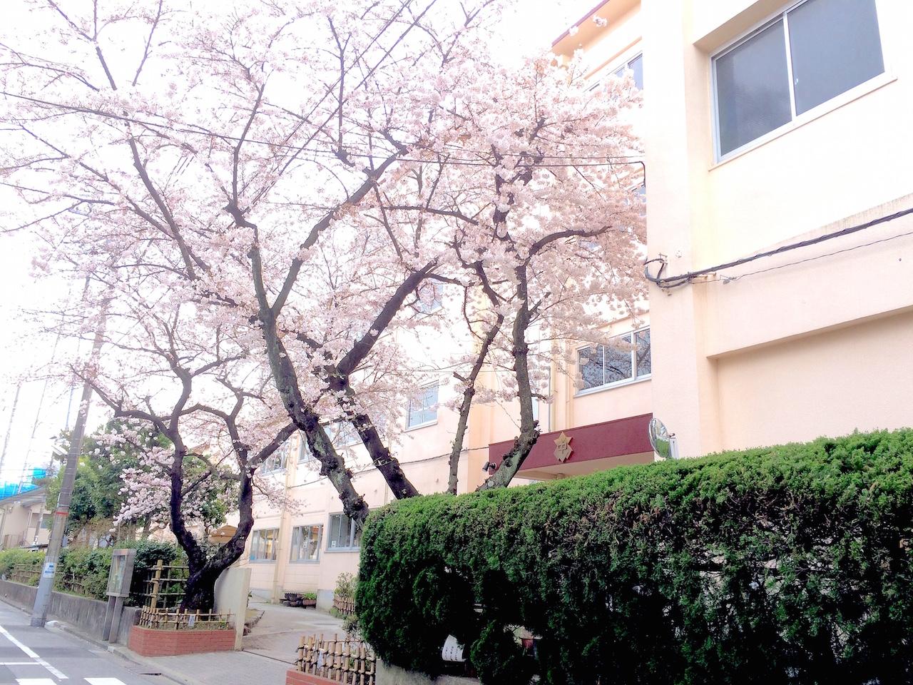 写真 2016-04-01 13 03 00